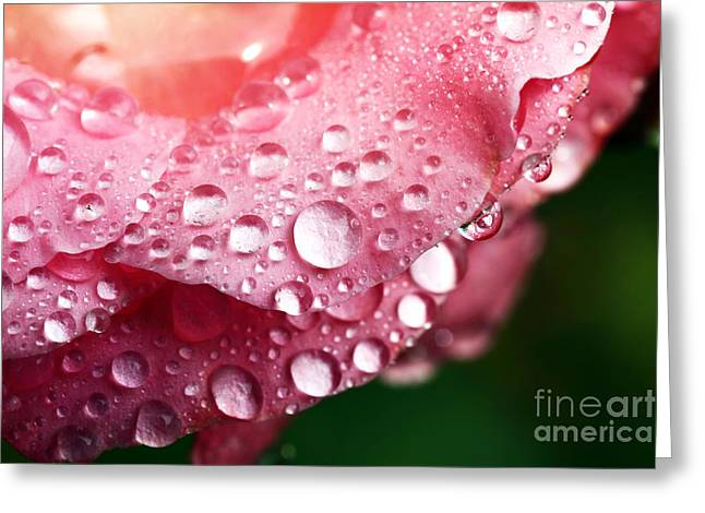 Pink Drops Greeting Card by John Rizzuto