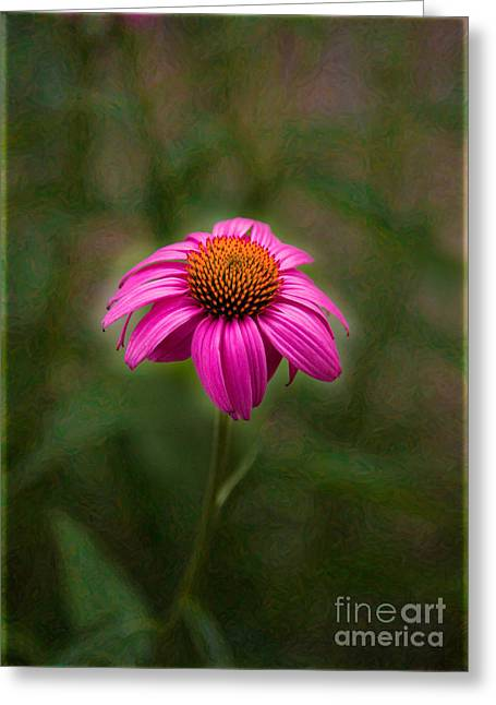 Owfotografik Greeting Cards - Pink Echinacea Digital Flower Photo.Painting Composite Artwork by Omaste Witkowski Greeting Card by Omaste Witkowski