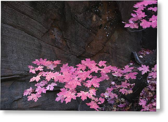 West Fork Greeting Cards - Pink Fall colors in Sedona Arizona Greeting Card by Dave Dilli