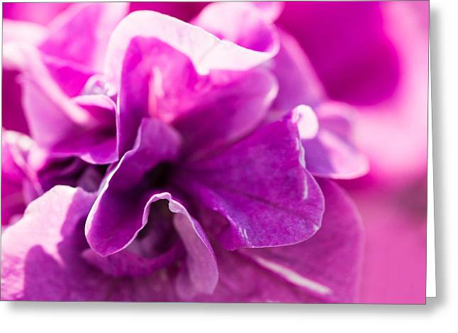 Close Focus Floral Greeting Cards - Pink - Featured 3 Greeting Card by Alexander Senin
