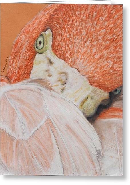 Exotic Pastels Greeting Cards - Pink Flamingo 2 Greeting Card by Jeanne Fischer
