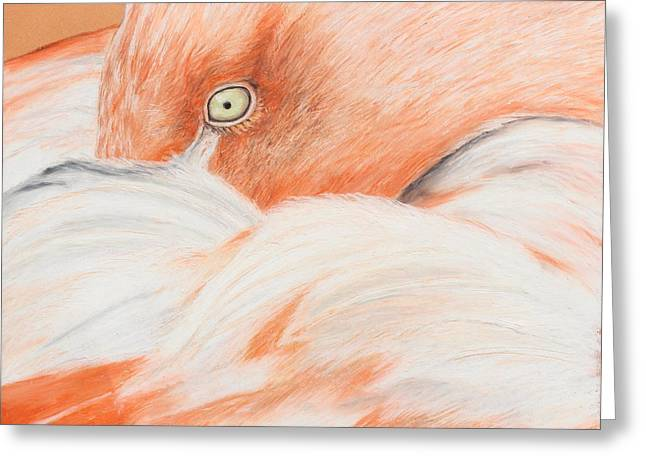 Exotic Pastels Greeting Cards - Pink Flamingo Greeting Card by Jeanne Fischer