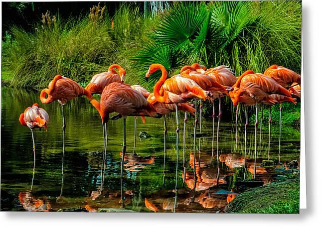Louis Dallara Greeting Cards - Pink Flamingos Greeting Card by Louis Dallara