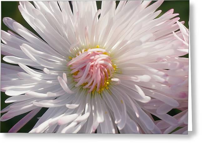 Brian Jones Greeting Cards - Pink Flower 3 Greeting Card by Brian Jones
