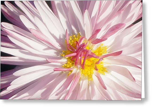 Brian Jones Greeting Cards - Pink Flower 4 Greeting Card by Brian Jones