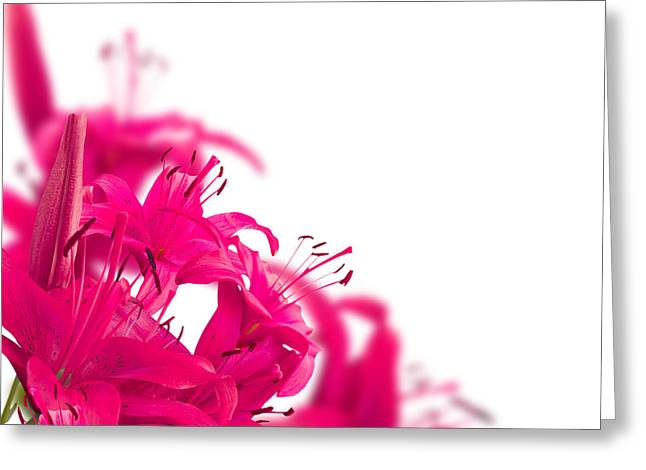 8 Volumes Greeting Cards - Pink flower Frames Greeting Card by Boon Mee