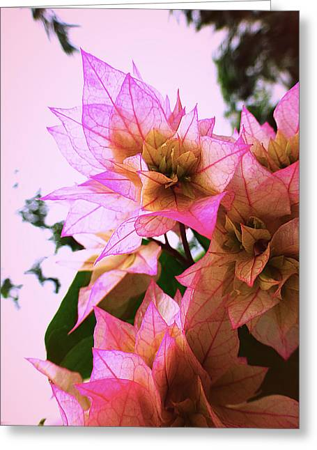 Pink Flower Prints Pyrography Greeting Cards - Pink flower Greeting Card by Girish J
