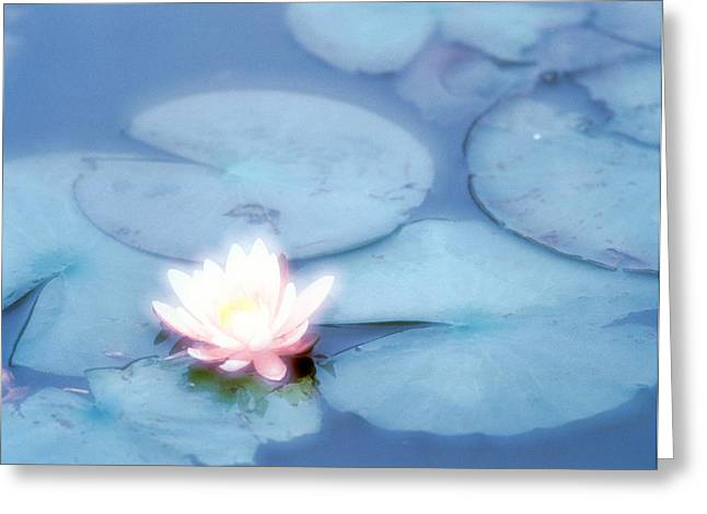 Selective Soft Focus Greeting Cards - Pink Flower In Pond, Lotus Greeting Card by Panoramic Images