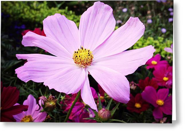 Pink Poppies Greeting Cards - Pink flower Greeting Card by Les Cunliffe