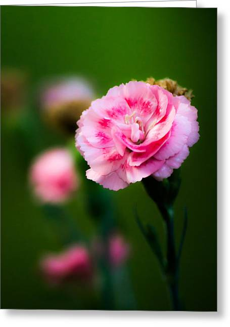 Pink Flower Prints Greeting Cards - Pink Flower Greeting Card by Shelby  Young