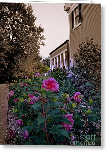 Indiana Flowers Greeting Cards - Pink Flowers at Dusk Greeting Card by Amy Lucid