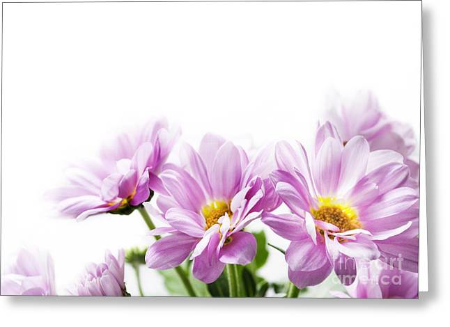 Surprise Greeting Cards - Pink flowers Greeting Card by Jelena Jovanovic
