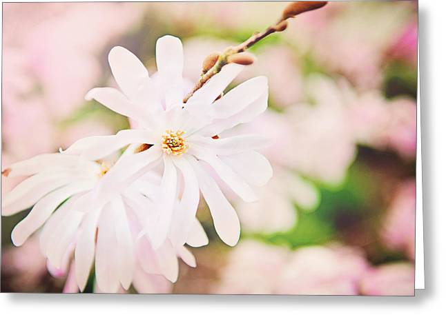 Pink Flower Branch Pyrography Greeting Cards - Pink Flowers Greeting Card by Kim Reimer