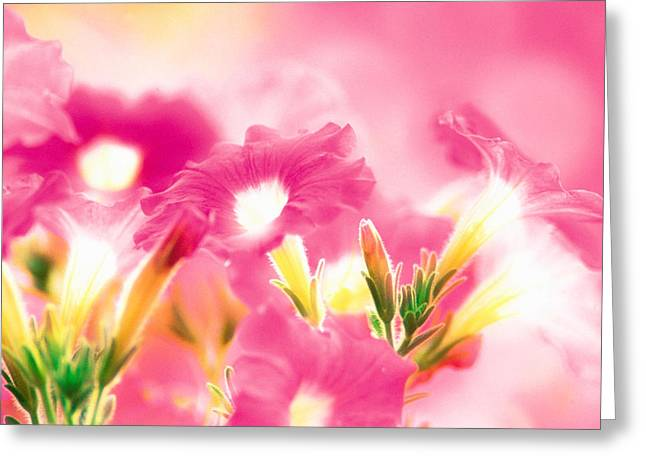 Close Focus Floral Greeting Cards - Pink Flowers Greeting Card by Panoramic Images