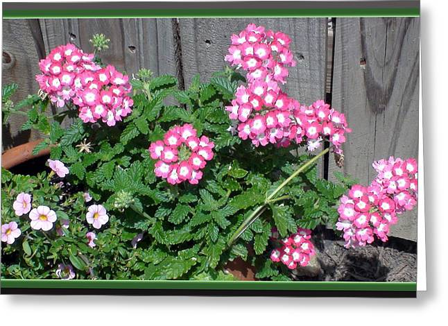 Sanford Greeting Cards - Pink Flowers Greeting Card by Sanford