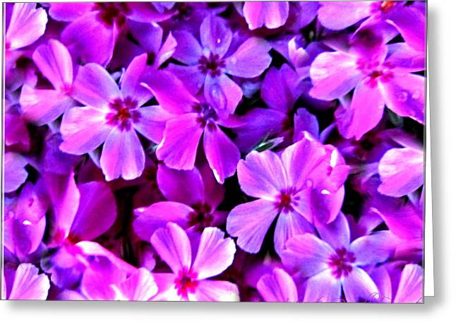 Fushia Greeting Cards - Pink Flox Everywhere Greeting Card by Danielle  Parent