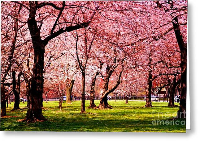 Historic Site Greeting Cards - Pink Forest Greeting Card by Patti Whitten