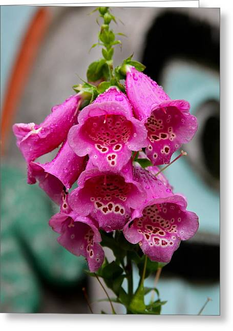 Capsule Greeting Cards - Pink Foxglove Greeting Card by Karon Melillo DeVega