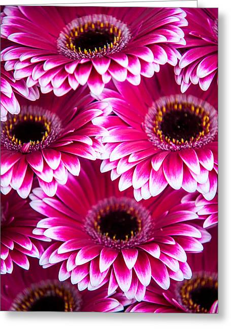 Square Format Greeting Cards - Pink Gerbera 1. Amsterdam Flower Market Greeting Card by Jenny Rainbow