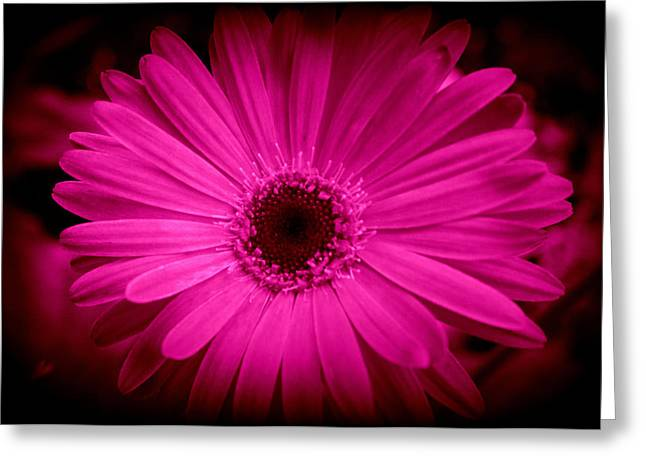 Deer Resistant Flowers Greeting Cards - Pink Gerbera 1 Greeting Card by Kay Novy