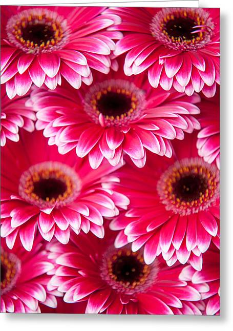 Square Format Greeting Cards - Pink Gerbera 2. Amsterdam Flower Market Greeting Card by Jenny Rainbow
