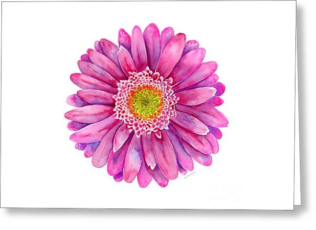 Pink Gerbera Daisy Greeting Card by Amy Kirkpatrick