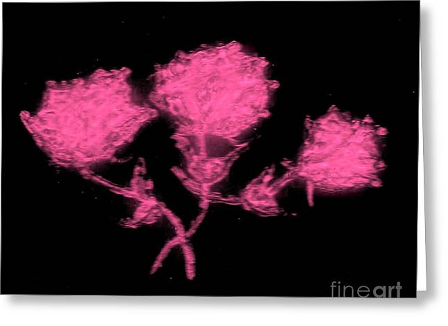Roses Glass Greeting Cards - Pink Glass Roses Greeting Card by Neil Stuart Coffey