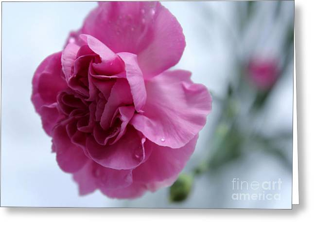 Pink Carnations Greeting Cards - Pink Grace Greeting Card by Krissy Katsimbras
