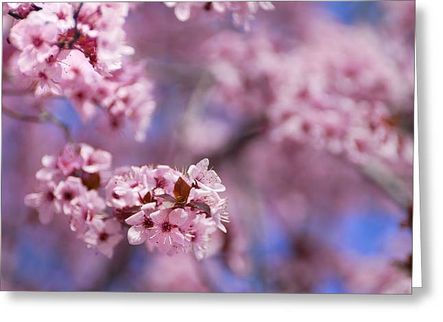 Pink Greeting Card by Guido Montanes Castillo