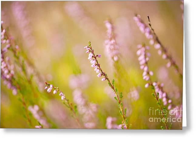 Abloom Greeting Cards - Soft focus of pink heather macro  Greeting Card by Arletta Cwalina