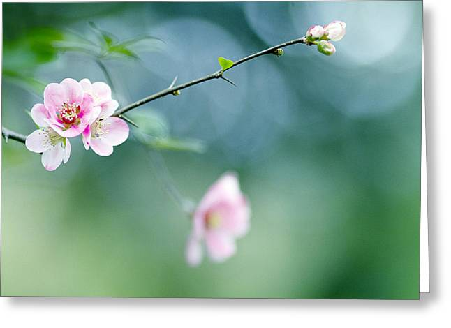 Pink Blossoms Greeting Cards - Pink Heaven Greeting Card by Rebecca Cozart