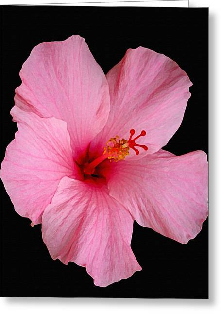 From Seed Greeting Cards - Pink Hibiscus Greeting Card by Dennis Buckman