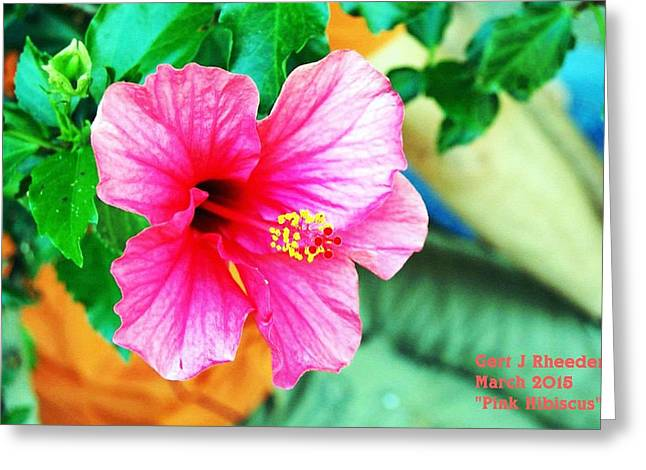 Commercial Photography Pastels Greeting Cards - Pink Hibiscus H a Greeting Card by Gert J Rheeders