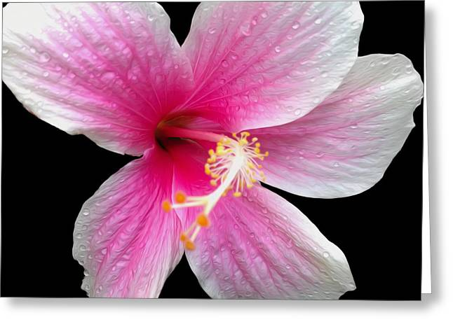 Stamen Digital Greeting Cards - Pink Hibiscus in the Rain painted  Greeting Card by Cheryl Young
