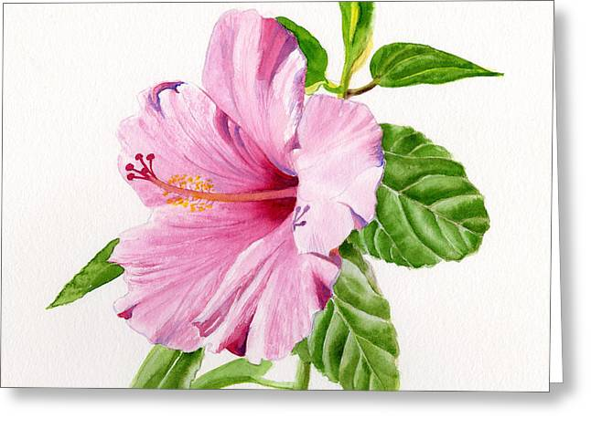 Pink Paintings Greeting Cards - Pink Hibiscus with White Background Greeting Card by Sharon Freeman