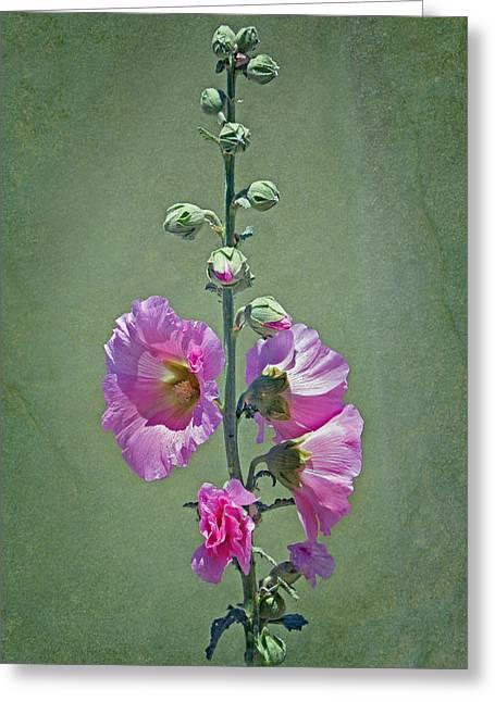 Alcea Rosea Greeting Cards - Pink Hollyhocks Greeting Card by Nikolyn McDonald