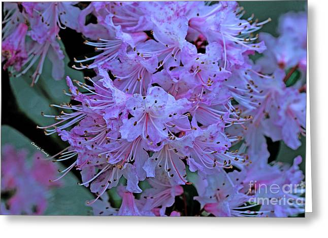 Pink Flower Branch Greeting Cards - Pink Hue Greeting Card by Cheryl Young