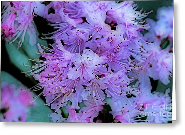 Pink Flower Branch Greeting Cards - Pink Hue    Orton effect Greeting Card by Cheryl Young