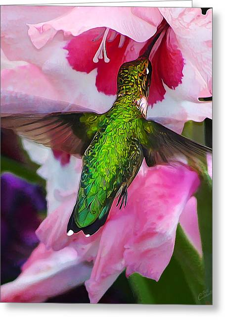 Iridescence Greeting Cards - Pink Hummer Greeting Card by Bill Caldwell -        ABeautifulSky Photography