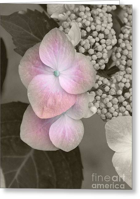 Smoky Pyrography Greeting Cards - Pink Hydrangea Greeting Card by Jacey Adrian
