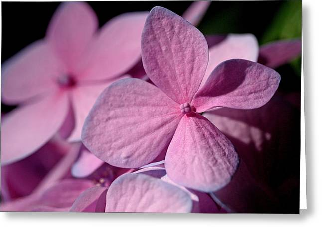 Penny Greeting Cards - Pink Hydrangea Greeting Card by Rona Black