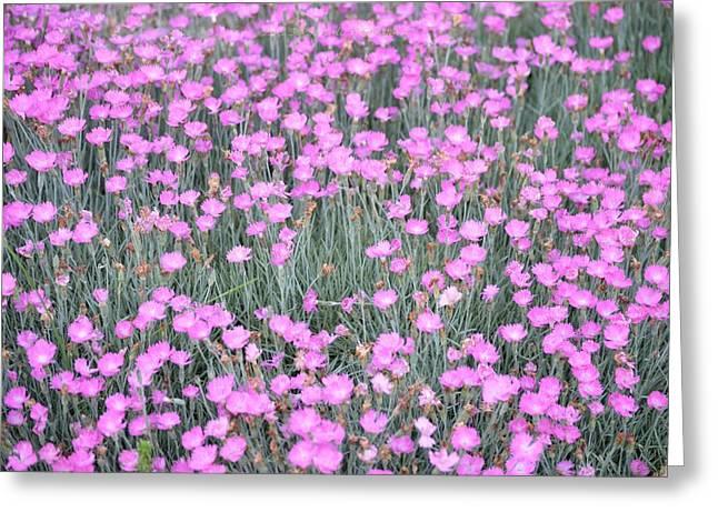Pink Incarnated Greeting Card by Sonali Gangane