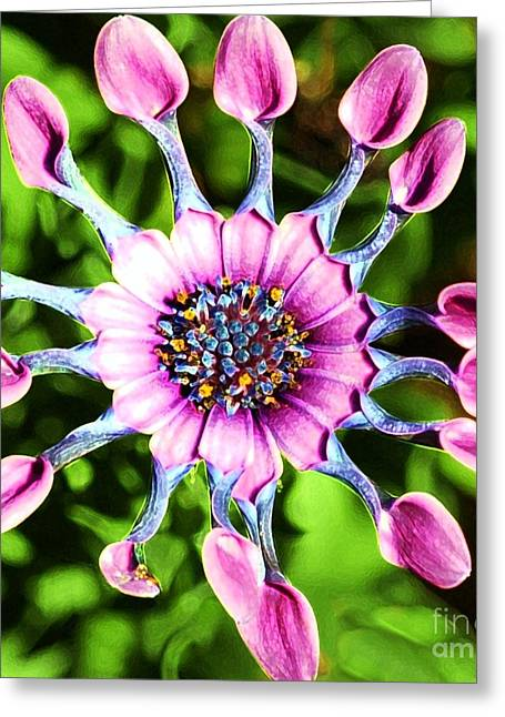 Struckle Greeting Cards - Pink Indian Painted Daisy Greeting Card by Kathleen Struckle