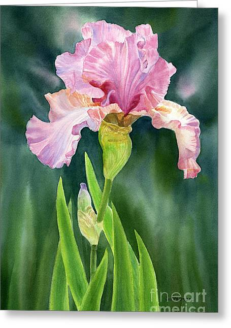 Pink Paintings Greeting Cards - Pink Iris with Dark Background  Greeting Card by Sharon Freeman