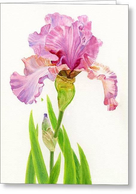 Pink Flower Prints Greeting Cards - Pink Iris with Leaves on White Greeting Card by Sharon Freeman