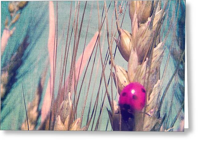 Fall Grass Greeting Cards - Pink Ladybug Greeting Card by Marianna Mills