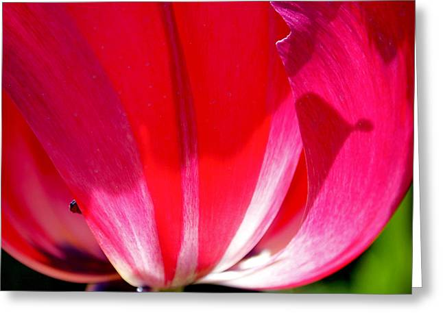 Pink Floral Greeting Cards - Pink Light Greeting Card by Rona Black