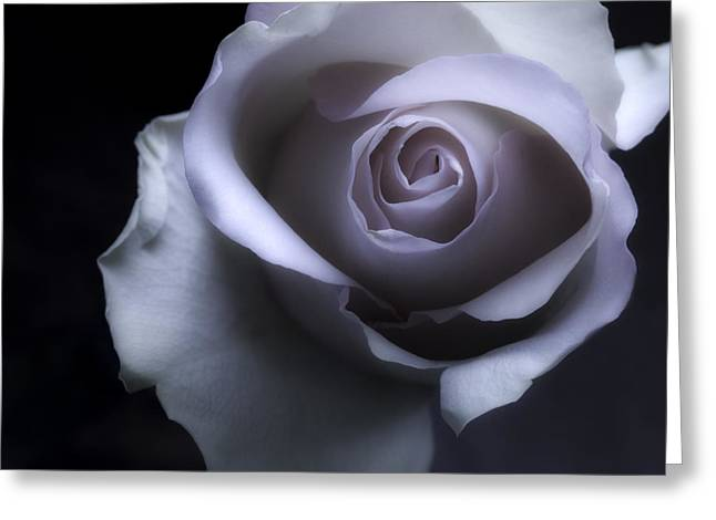 Flora Framed Prints Greeting Cards - Black And White Rose Flower Macro Photography Greeting Card by Artecco Fine Art Photography