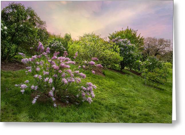 Lilac Greeting Cards - Pink Lilac Greeting Card by Robin-lee Vieira