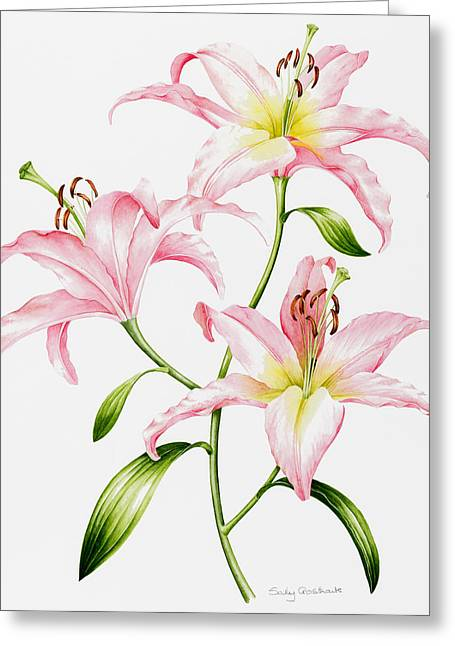 In Bloom Greeting Cards - Pink Lily Greeting Card by Sally Crosthwaite